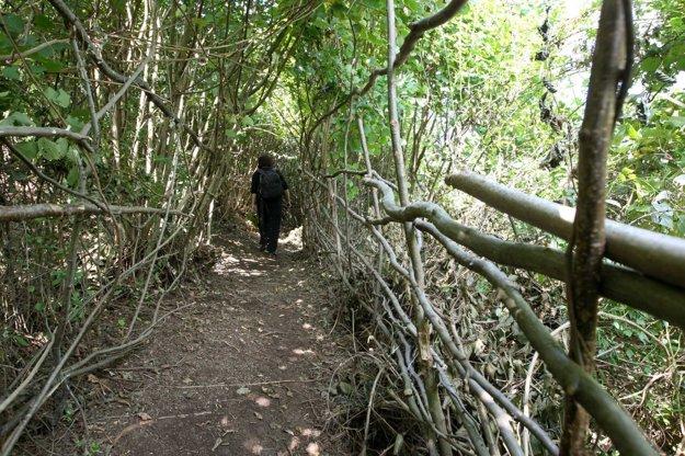 Kúsok opodiaľ nájdete prírodný tunel donedávna nepriechodnou húštinou.