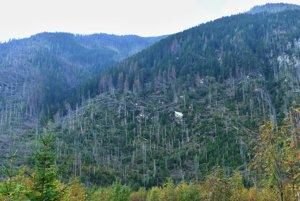 Pohľad na polom, v ktorom vyrastá nový les v Tichej doline.