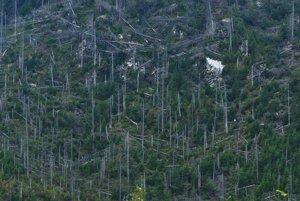 Detailný pohľad na polom, v ktorom vyrastá nový les.