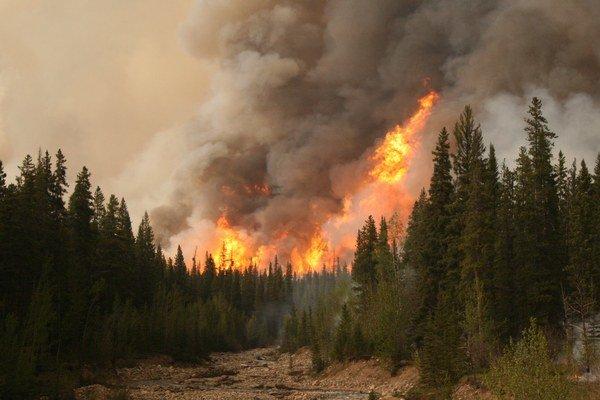 Až 70 percent straty lesov spôsobili požiare.