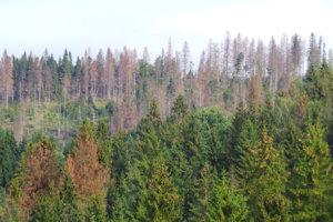 Lesy na Orave vysychajú. Takto to vyzerá medzi Habovkou a Oravským Bielym Potokom.