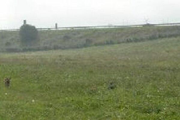 V súčasnosti je obľúbeným miestom pre voľný výbeh psov plocha neďaleko diaľnice D1 na sídlisku Nábrežie.