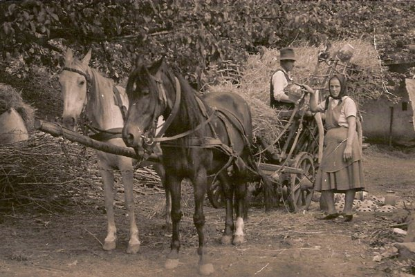 Fotokniha obce Brehy obsahuje až 275 fotografií.