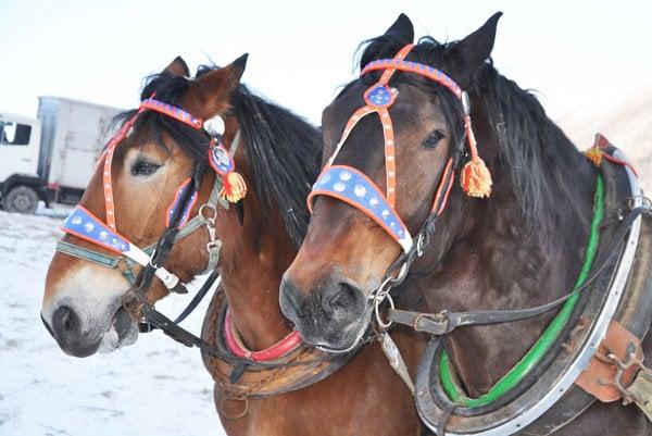 za nezaregistrovaného koňa môže majiteľ dostať pokutu až 3500 eur.