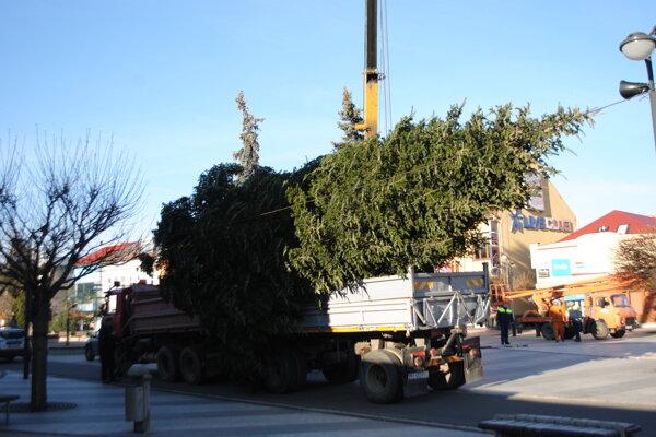 Vianočnú jedľu privážajú na michalovské námestie.