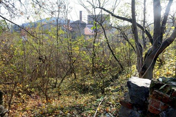 Park vkatastrofickom stave. Bujná vegetácia niekde neumožňuje vstup do parku.