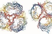 Molekulárne modely receptorov, na ktoré sa špecializovali dva nové druhy vírusu.