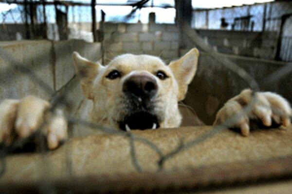 Bojnické poštárky zažívali kvôli psovi nebezpečné situácie.