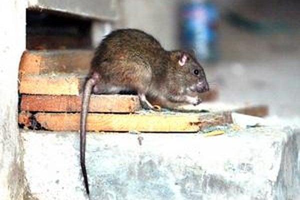 Súčasná vláda sa vie potkanov zbaviť za zlomok ceny Smeru.