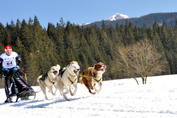 Snežné psy si užijete v Telgárte