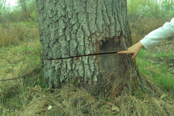 Napílené stromy. Situácia sa opakuje po takmer troch rokoch.
