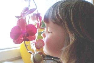 Naša čuchová pamäť je taká výnimočná, že ak zacítime nejakú vôňu, ktorú sme cítili pred mnohými rokmi, napríklad v detstve, dokáže v nás vyvolať rovnaké pocity, ako vtedy, alebo spomienku na konkrétnu scénu.