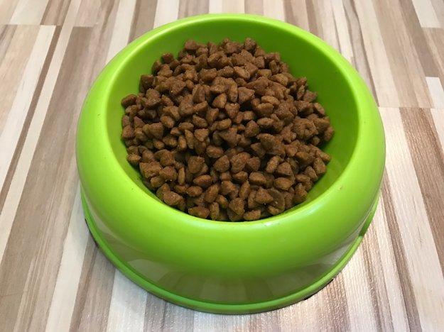 Psy sprémiovými krmivami špeciálnu stravu počas zimy nepotrebujú.