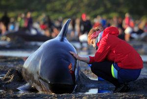 Dobrovoľníčka omýva vodou uväznenú veľrybu.