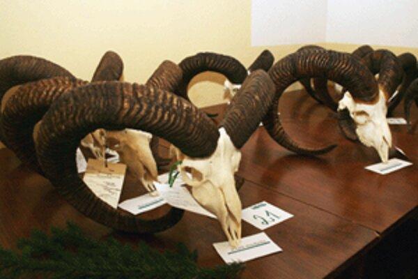 Poľovníci vystavujú v Kanianke aj muflónie trofeje.