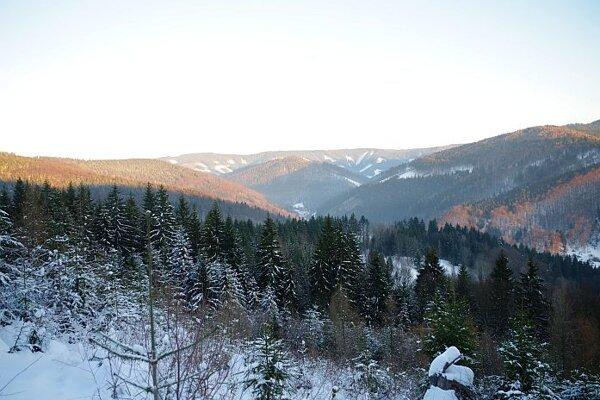 Lesy v Hornej Marikovej.