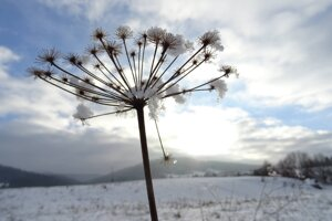 Zima vo Vysokej nad Kysucou.