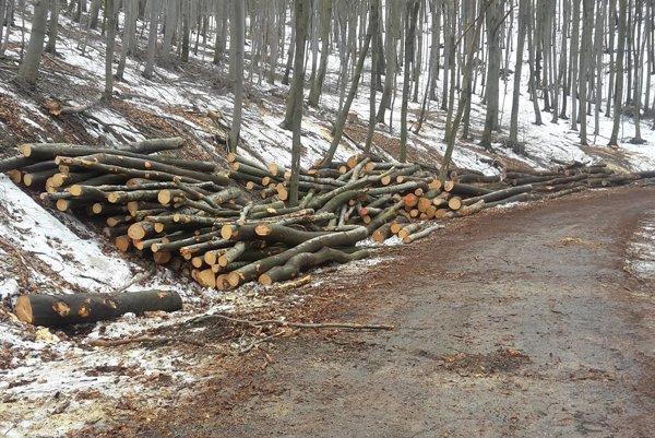 Výrub pri ceste. Kopy zoťatých stromov lemovali obľúbenú turistickú a cyklistickú trasu.