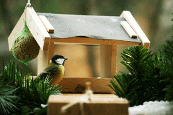 V chladnom počasí sa vtáčiky spoliehajú na štedrosť ľudí.
