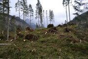 Vietor poškodil takmer 10-tisíc stromov.