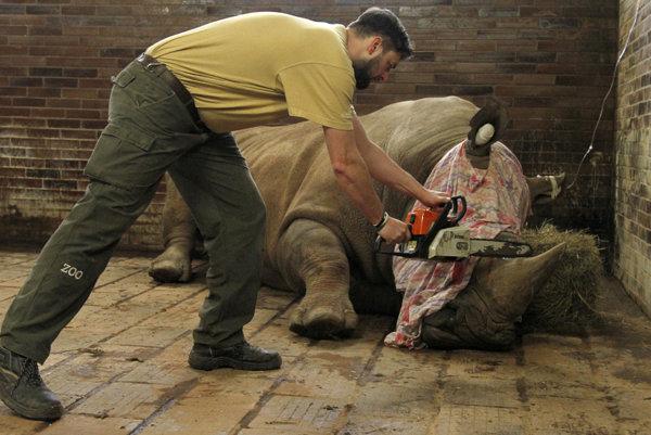 Nosorožcov takto chránia pred pytliakmi.