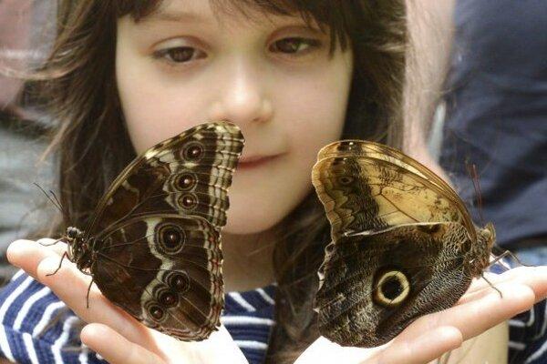 Motýliu záhradu budú mať aj v Žabokrekoch.