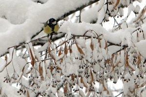 Príroda nám v roku 2013 pripravila neobvyklé prekvapenie.