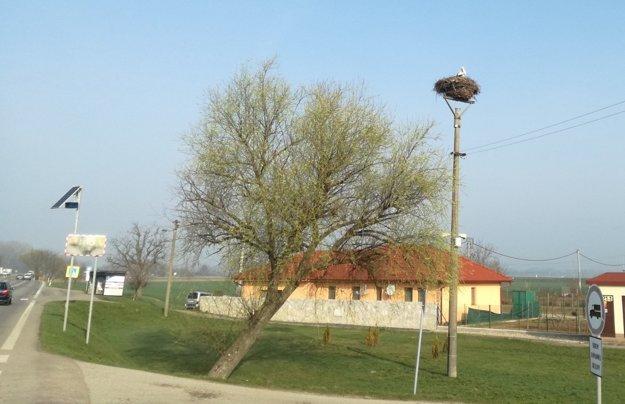 Hniezdo sa nachádza kúsok od hlavnej cesty z Levíc do Nitry.