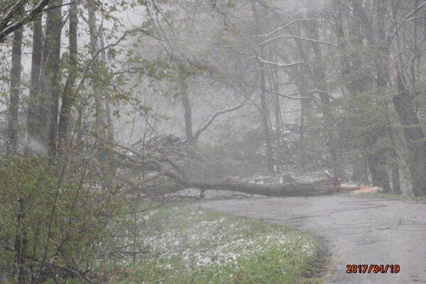 Spadnutý strom a elektrické vedenie v katastri obce Chvojnica.