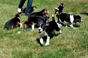 Vedci z Cornellovej univerzity v New Yorku priviedli na svet prvé šteňatá zo skúmavky.