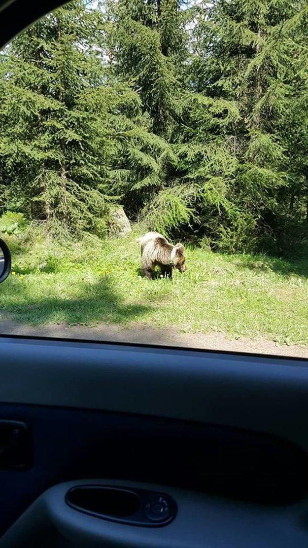 Medvedicu si ľudia húfne fotografujú.