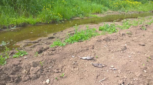 Ryby sa dostali aj na pole. Podľa veterinárov zatiaľ priame nebezpečenstvo nehrozí.