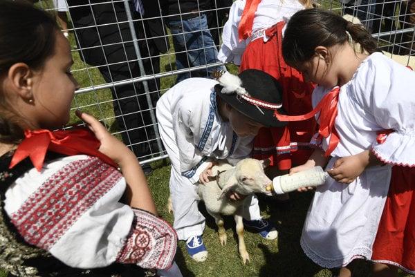 Deti s jahňaťom nového národného plemena - Slovenskej dojnej ovce.