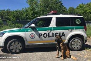 Košický Rex. Pes Nyko bránil policajtov, keď na nich strieľali.