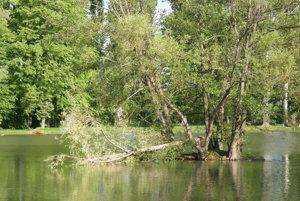 Strom, ktorý rástol na ostrove, spadol do vody.