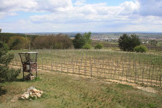Kraví hora je jedna z viničných tratí VOC Znojmo.
