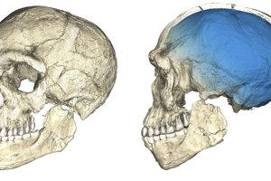 Zložený záber lebky Homo sapiens nájdenej v Maroku. Zložená je z viacerých fosílií.
