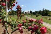 Ruža nie je len jedna, dokazuje rozárium v Arboréte Mlyňany