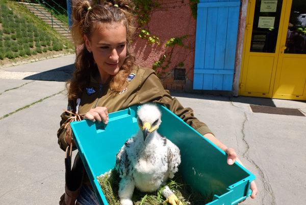Školáčka Sarah je pre orlíča náhradným rodičom.