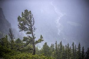 Hmla je vraj najlepšia na fotografovanie lesa – lebo vytvorí jednofarebné pozadie. Tu pózuje limba.
