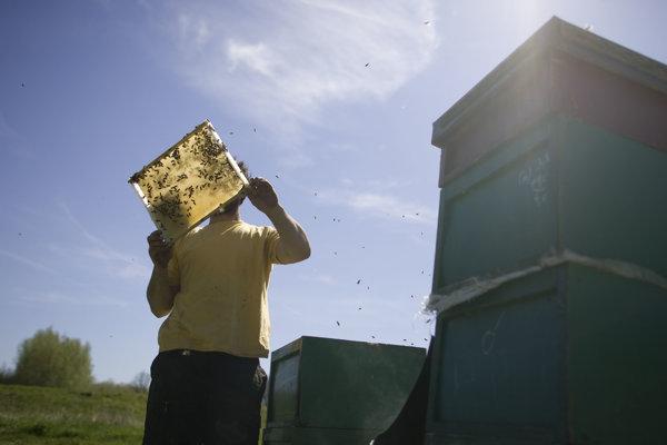 Mor včelieho plodu ohrozuje včelstvá.