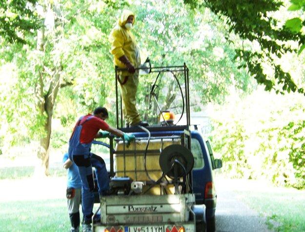 V Nitre firma striekala vyše 400 pagaštanov. Začala skoro ráno, park prišiel na rad ako posledný.