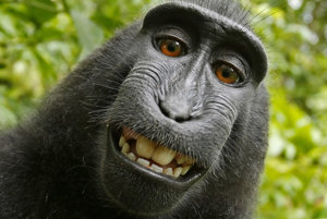 Autorom fotky má byť makak Naruto na snímke.