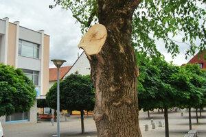 Koruna starého stromu je dnes celá orezaná.