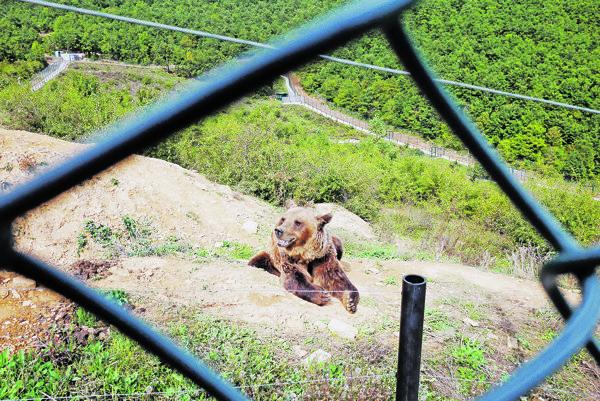 Medveď hnedý. Ilustračná fotografia.