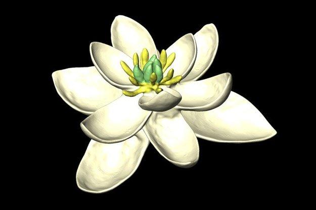 Úplne prvý kvet sa stavbou nepodobal na žiadny žijúci kvet.