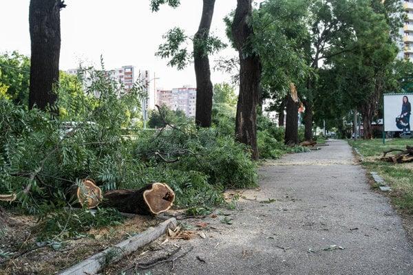 Popadané stromy v Bratislave.