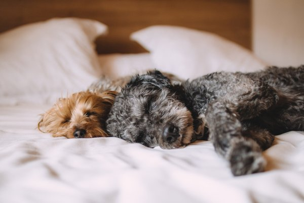 Škodia psi v spálni? Podľa toho kde ležia.