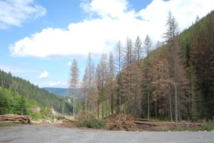 Aj oravská časť národného parku je vplyvom lykožrúta čoraz suchšia.