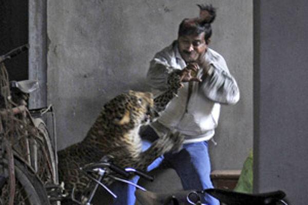 Jednému mužovi leopard strhol kožu z časti temena.